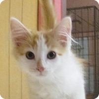 Adopt A Pet :: Dewey - Reeds Spring, MO