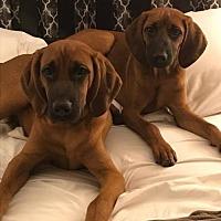 Adopt A Pet :: Olive - Hewitt, NJ
