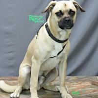 Adopt A Pet :: Frank - Fairfax Station, VA