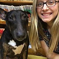 Adopt A Pet :: Piper - Glenwood, AR