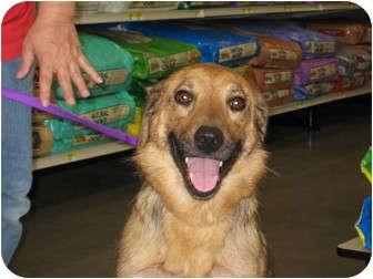 Shepherd (Unknown Type)/Hound (Unknown Type) Mix Dog for adoption in Pinehurst, North Carolina - Jennie