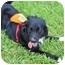 Photo 3 - Border Collie Mix Dog for adoption in Homestead, Florida - Negrita Flora