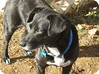 Labrador Retriever Mix Dog for adoption in Huntsville, Alabama - Lulu