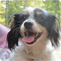 Adopt A Pet :: Skeeter - Windham, NH