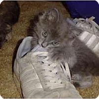 Adopt A Pet :: Bogie - Davis, CA