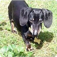 Adopt A Pet :: Libby - San Jose, CA