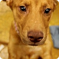 Adopt A Pet :: Bianca - Silsbee, TX