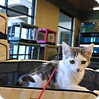 Adopt A Pet :: Chanel & Chantal - Scottsdale, AZ