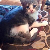 Adopt A Pet :: Boobare - Port Republic, MD