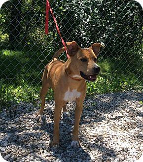 Cattle Dog Mix Dog for adoption in Atchison, Kansas - Ci Ci