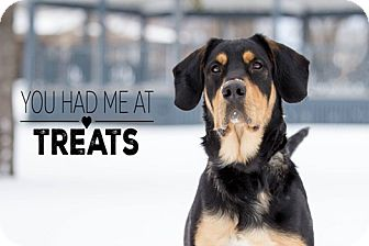 Coonhound/Rottweiler Mix Dog for adoption in Lucknow, Ontario - Duke