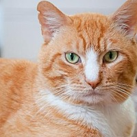 Adopt A Pet :: Marley - Santa Rosa, CA