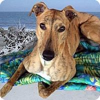 Adopt A Pet :: Prescot - Spencerville, MD