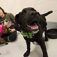 Adopt A Pet :: Farley - Muldrow, OK
