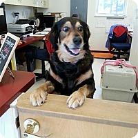 Adopt A Pet :: Duncan - Fairfax Station, VA