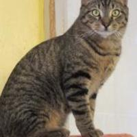 Adopt A Pet :: Orion - Westville, IN