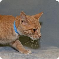 Adopt A Pet :: Moe - Medina, OH