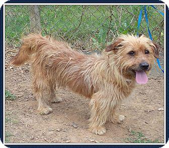 Petit Basset Griffon Vendeen Mix Dog for adoption in Marietta, Georgia - MOE