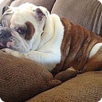 Adopt A Pet :: Buddy - Gilbert, AZ