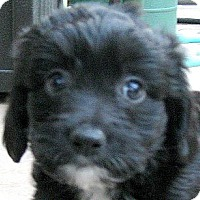 Adopt A Pet :: Baby Sabrina - Oakley, CA