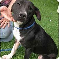 Adopt A Pet :: Shellie - Riverside, CA