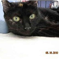 Adopt A Pet :: Angelina - Riverside, RI