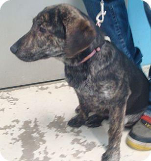 Labrador Retriever Mix Puppy for adoption in Crookston, Minnesota - Malibu