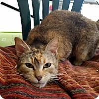 Adopt A Pet :: Candy - Palo Cedro, CA