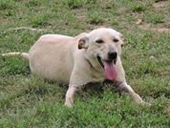 Labrador Retriever/Retriever (Unknown Type) Mix Dog for adoption in Cottonport, Louisiana - Zoe