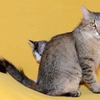 Adopt A Pet :: Mousse - Salt Lake City, UT