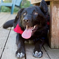 Adopt A Pet :: Justin loves other dogs - Sacramento, CA