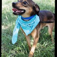 Adopt A Pet :: Jett - Norman, OK