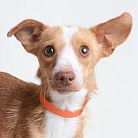 Adopt A Pet :: Cardinal - Wilmington, DE