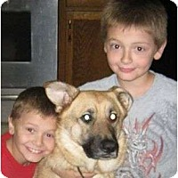 Adopt A Pet :: bella bells urgent reduced - Plainfield, CT