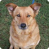 Adopt A Pet :: Starfire - Glenpool, OK