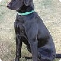 Adopt A Pet :: Claudia - Lewisville, IN