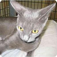 Adopt A Pet :: Lolita - Deerfield Beach, FL