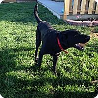 Adopt A Pet :: Titan - Lewisville, IN