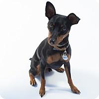 Adopt A Pet :: Troy - Santa Barbara, CA