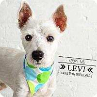 Adopt A Pet :: Levi-Pending Adoption - Omaha, NE
