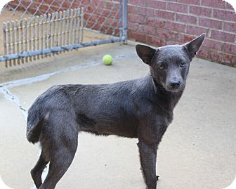 Feist/Fox Terrier (Wirehaired) Mix Puppy for adoption in Lumberton, North Carolina - Luna