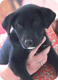 Labrador Retriever Mix Dog for adoption in Norwalk, Connecticut - Andi