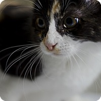 Adopt A Pet :: Eva - Jefferson, NC