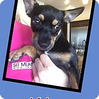 Adopt A Pet :: KJ - Scottsdale, AZ