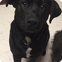 Adopt A Pet :: Reggie - Saskatoon, SK