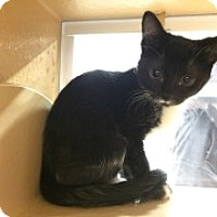 Adopt A Pet :: Tiny Tot - McHenry, IL