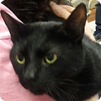 Adopt A Pet :: Theodore - Trevose, PA