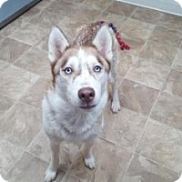 Adopt A Pet :: Luna - Chico, CA
