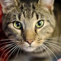 Adopt A Pet :: Donnie - Huntingdon, PA
