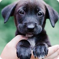 Adopt A Pet :: Sammy $250 - Seneca, SC